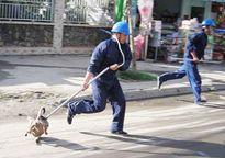 Vì sao Hà Nội chưa tiến hành bắt chó thả rông?