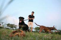 Chó vẫn thả rông, không rọ mõm khắp công viên, đường phố Hà Nội