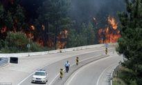 Cháy rừng tại nhiều nước làm hàng chục người chết