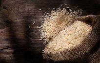 Bảo quản gạo không bị mối mọt dùng quanh năm