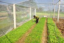 Quảng Nam: Xây dựng thí điểm mô hình tiêu thụ nông sản và cung ứng vật tư nông nghiệp
