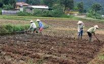 Các địa phương, đơn vị hỗ trợ người dân vùng lũ khôi phục sản xuất
