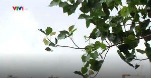 Hà Nội đón gió lạnh đầu mùa