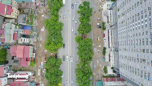 Hàng cây đường Phạm Văn Đồng trước ngày chặt hạ, di chuyển