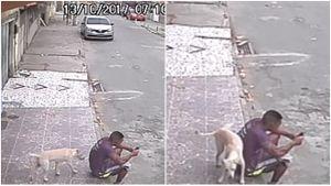 Đang mải mê ngồi bấm điện thoại trên vỉa hè, bị chó đi qua ghếch chân tiểu tiện vào lưng