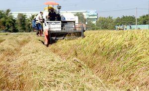 Nâng cao năng lực thương nhân trong xuất khẩu gạo