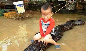 Gia đình ở Thanh Hóa bị phạt vì nuôi trăn khổng lồ