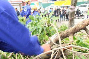 Bắt đầu chặt hạ, di chuyển gần 1.300 cây xanh trên đường Phạm Văn Đồng