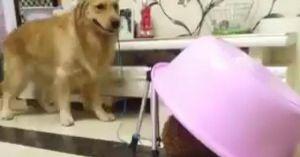 Đến chó còn biết 'úp sọt' gái