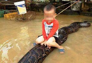 Bé trai cưỡi trăn khổng lồ ở Thanh Hóa: Chính quyền địa phương lên tiếng