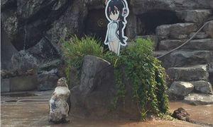 Tình yêu đặc biệt của chú cánh cụt Nhật Bản với tấm bìa hoạt hình