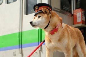Nhật Bản bổ nhiệm chó, mèo, tôm hùm là trưởng ga tàu