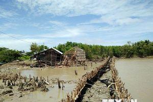 Bờ biển Kiên Giang sạt lở, 600ha đất rừng phòng hộ biến mất