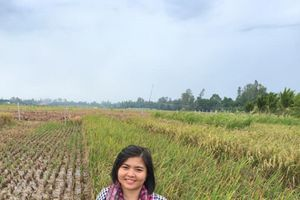 Gia tăng giá trị hạt gạo trồng trên những cánh đồng rươi