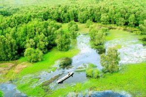 Lạc lối nơi rừng tràm Trà Sư sông Hậu