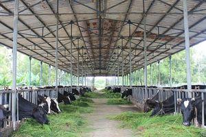 Sữa tươi nguyên chất Lothammilk nguồn dinh dưỡng tốt nhất