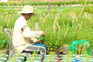 Nông dân miền Tây đang tất bật chuẩn bị hoa cho Tết Mậu Tuất 2018