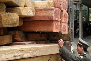 Bắt giữ 'gỗ lậu' trên xe dùng biển số giả