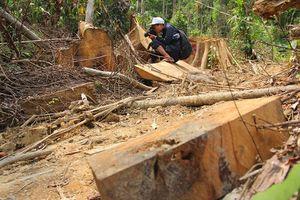 'Xẻ thịt' rừng phòng hộ Quảng Nam