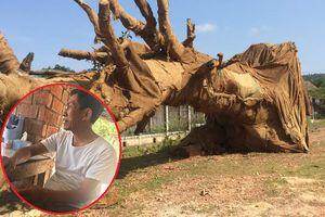 Cây 'quái thú' bị bỏ lại ven đường ở Huế: Người được thuê tưới nước nói gì?