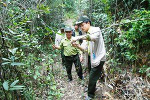 Bình Định: Chung sức giữ rừng