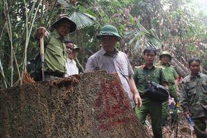 Sau gợi ý của phó chủ tịch tỉnh, nhiều kiểm lâm Quảng Nam xin nghỉ