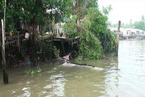 Cần Thơ: Liên tục sạt lở nghiêm trọng bờ sông