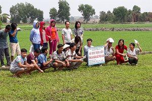 9X trồng rau muống VietGAP lãi 20 triệu đồng/tháng