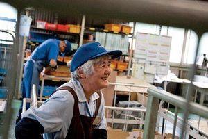 Lao động cao tuổi có phải đóng bảo hiểm xã hội không?