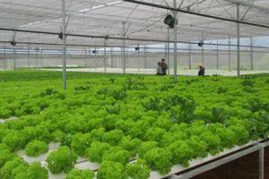 Đánh thức 'giấc ngủ' của nông nghiệp ứng dụng công nghệ cao