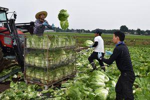 Nông nghiệp Nhật và cơ hội cho lao động nước ngoài