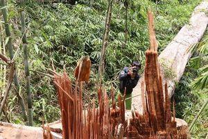 Truy nã 2 'ông trùm' tổ chức tàn phá rừng Quảng Nam