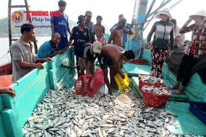 'Nữ kiện tướng' nuôi cá bóp ở đảo Rùa