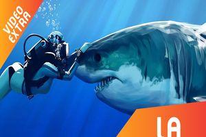 Cá mập có phải là sát thủ tốc độ dưới lòng đại dương?