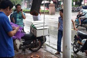HN: Cây sưa đỏ hơn 20 năm tuổi bị cưa trộm giữa đêm mưa bão