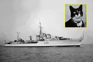 Ly kỳ chuyện chú mèo cực may, sống qua tất cả vụ đắm tàu