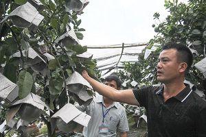 10 năm Hà Nội mở rộng địa giới: Khởi sắc ở những vùng quê