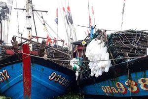 Hàng tấn bèo tây trôi về cảng, tàu thuyền 'mắc kẹt' sau bão số 3