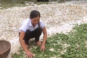 Thoát nỗi đau bệnh xương khớp nhờ bài thuốc của lương y Triệu Thị Hòa