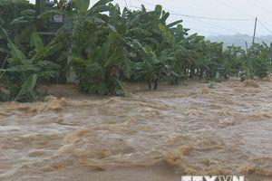 Hình ảnh dòng nước lũ chảy cuồn cuộn sau mưa lớn tại các địa phương