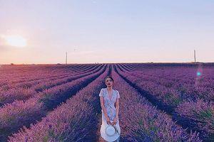 Hương Giang đẹp tựa nữ thần khi đứng giữa thiên đường hoa Lavender nổi danh nước Pháp!