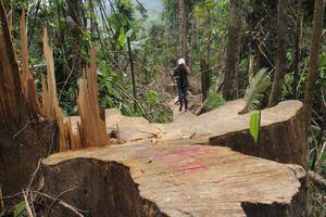 Đầu thú sau hơn 2 tháng bị truy nã vì cầm đầu vụ phá rừng lim xanh