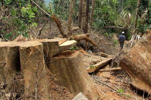 Khiển trách Chủ tịch xã Tà Lu vụ phá rừng phòng hộ Sông Kôn