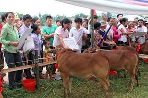 Gia Lai: Trao tặng bò giống sinh sản cho các hộ nghèo xã An Thành