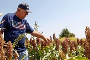 Mỹ có kế hoạch trợ cấp nông dân 12 tỷ USD