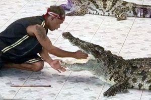 Khán giả sốc nặng khi chứng kiến cảnh cá sấu cắn huấn luyện viên