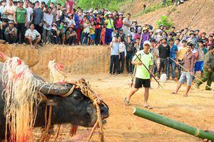 Chi hơn 100 triệu làm lễ đâm trâu, dân làng kiệt quệ