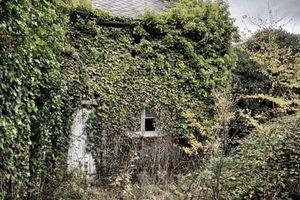Khung cảnh ngôi nhà bỏ hoang hơn 60 năm ở Anh