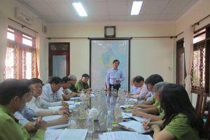 Vụ khai thác rừng trái phép tại Bình Định: Khai thác có tổ chức vì mục đích kinh doanh