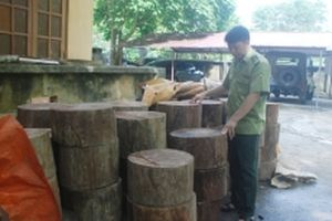 Nhiều giải pháp bảo vệ rừng nghiến Phong Quang
